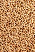 Stock Photo of coriander