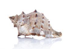 Stock Photo of beautiful seashell