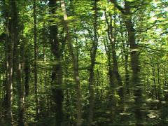 FOREST Umbrian Forest camera car 2 Stock Footage