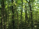 Stock Video Footage of FOREST Umbrian Forest camera car 2