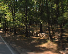 GARGANO Umbrian forest and landscape camera car Stock Footage