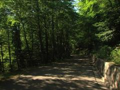 FOREST Umbrian Forest camera car 3 Stock Footage