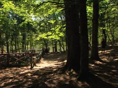 FOREST Umbrian Forest and small lake pan Stock Footage