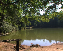 FOREST Umbrian Forest small lake pan Stock Footage