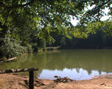 Stock Video Footage of FOREST Umbrian Forest small lake pan
