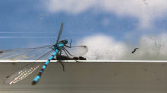 Dragonfly Stock Footage