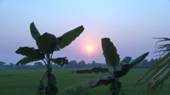 India Kerala banana leaves foreground of field at sunset 5 Stock Footage