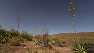 Stock Video Footage of Yucca Cactus Astro Time Lapse 1