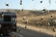 Bug Splatter on Windshield #3 - stock photo