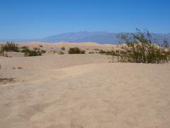 Stock Photo of Dunes