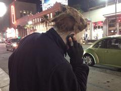 Michael Meyers Impersonator on his Cel Phone in Hollywood Stock Photos