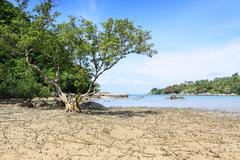 big tree on the beach at layan beach phuket thailand - stock photo