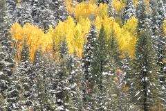 Winter gold Stock Photos
