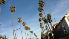 California Palm Trees from a Moving Vehicle - stock footage