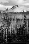 Stock Photo of ragged burned mountain peak mt. washington oregon cascade range