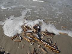 noth sea - stock photo