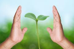Two hand holding young plant on nature background Stock Photos