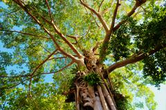 Giant tree in the rain forest Stock Photos