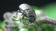 Beetle macro bug Stock Footage