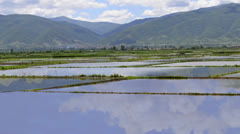 Rice paddy fields - hd1080i timelapse, water filled rice fields parcels ready Stock Footage