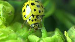 Ladybug macro Stock Footage
