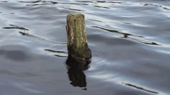 Snag sticks out of water of the deep lake Stock Footage