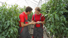 Two Farmers Holding Green Peppers Stock Footage