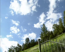 Petrified tree in Yellowstone National Park - low angle Stock Footage
