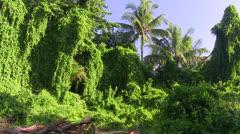 Rain forest , bird sounds Stock Footage