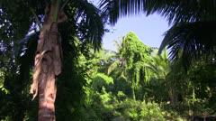 Rain forest jungle bird noises Stock Footage
