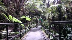 Volcano National Park, lava tube enterance trail Stock Footage