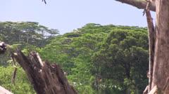 jungle deforestation  farming Stock Footage