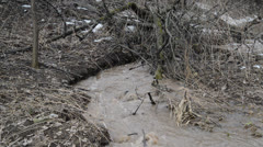 Dirty spring stream in forest - stock footage