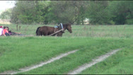 Meadow, team with people, horses Stock Footage