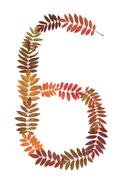 numeral six 6 put from autumn sheet - stock photo