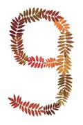 numeral nine 9 put from autumn sheet - stock photo