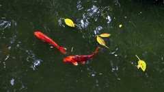 Fish in pond Stock Footage