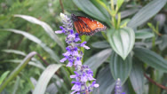 Butterfly in Orlando Stock Footage