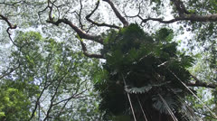 jungle canopy rotating, tall - stock footage