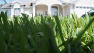 Crawling Thru Grass Stock Footage