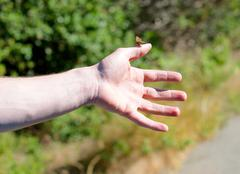 Butterfly rests on a man's hand Stock Photos