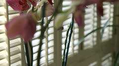 crane up to orchid - stock footage