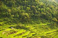 Stock Photo of rice paddies