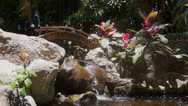 Stock Video Footage of Small Bridge And Waterfall In Garden