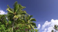 Tropical lagoon, Hawaii Stock Footage
