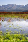 Scenic marsh water panoramic mountain landscape outback alaska Stock Photos