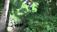 Jungle lava tube ,lost Stock Footage