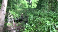 Jungle lava tube Stock Footage
