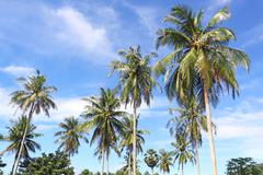 Coconut palm trees and sky Stock Photos