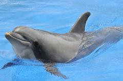Bottlenose dolphin Stock Photos